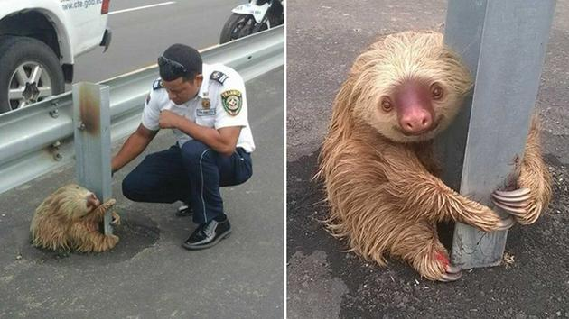 animals saved by people in uniform