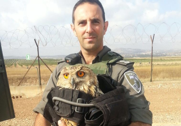 saved owl