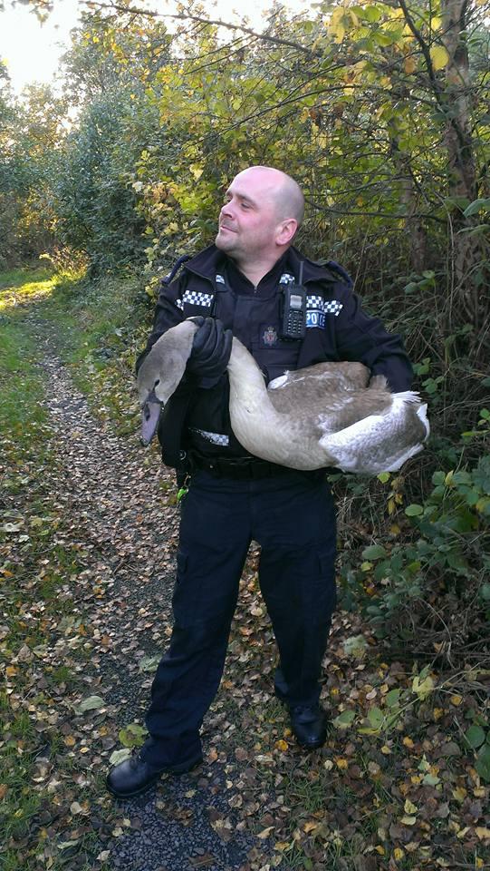 saved swan