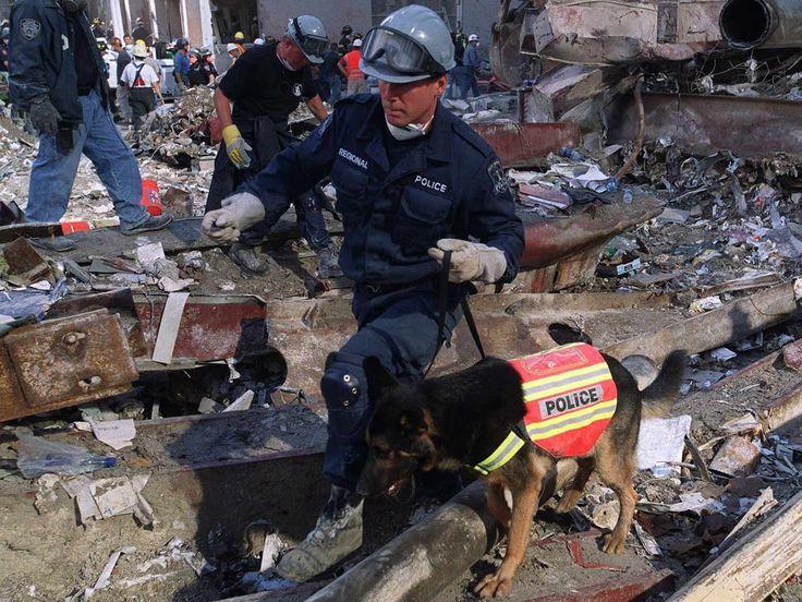 police officeer dog