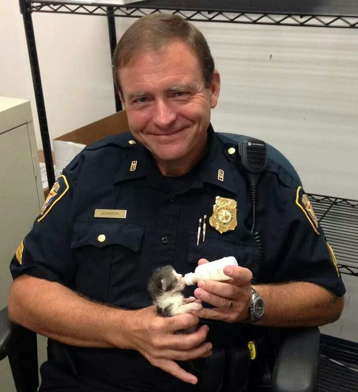 kittens found by police